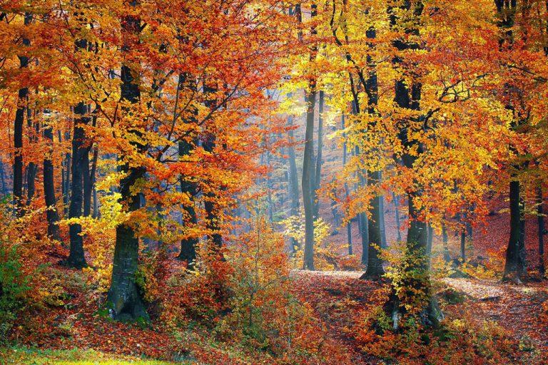 Lee más sobre el artículo El otoño: tiempo de recogimiento y dulce mirada interior