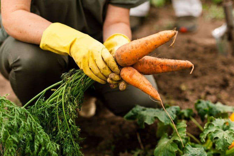 Lee más sobre el artículo ¿Cuál es la alimentación del futuro?: Parte 1